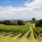 Hillside Vineyard on Waiheke island